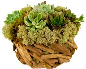Succulent Basket from Apples to Zinnias, the Gifted Florist in Dallas, Texas