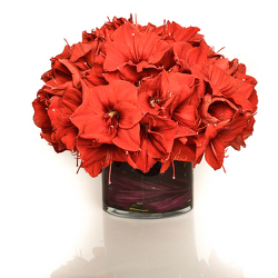 Amaryllis Beauty from Apples to Zinnias, the Gifted Florist in Dallas, Texas
